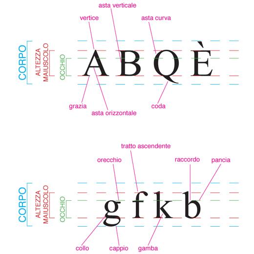 anatomia caratteri